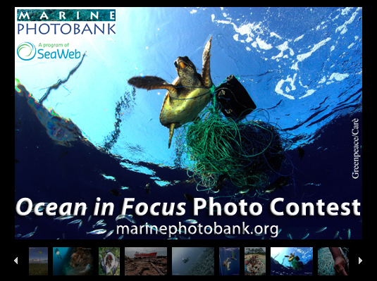 Ocean In Focus 2012 Photography Contest