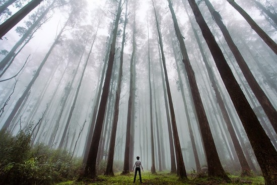 Contoh Foto Landscape Hutan Pinus