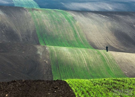 Contoh Foto Landscape Perkebunan