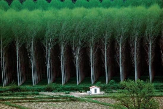 Contoh Foto Pemandangan Hutan Yang Keren