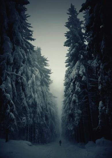 Contoh Foto Pemandangan Pohon Bersalju