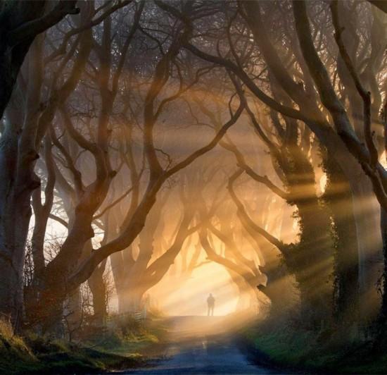 Contoh Landscape Photography Di Dalam Hutan